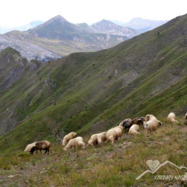 Góry, pasterze i śpiew – warsztaty – Biały Kościół, 23.04.2018